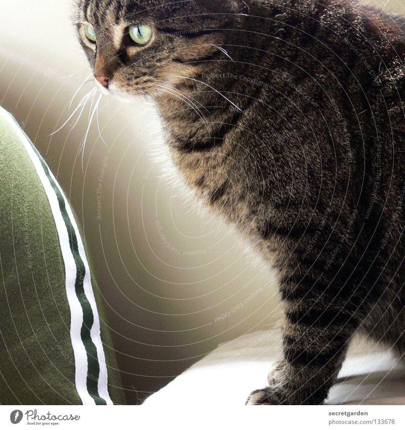 no sporty cat Katze Tier Krallen Katzenpfote Pfote Erholung Streifen gestreift Stoff Physik kuschlig grau gemütlich lümmeln Sofa Material Wohnzimmer Möbel ruhig