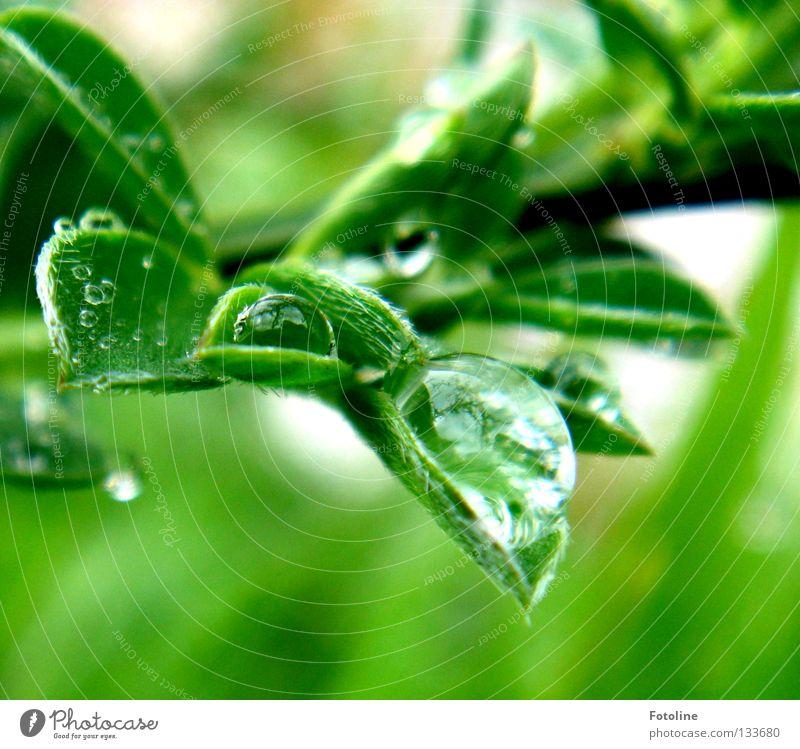 Nach dem Regen werden Wassertropfen von einem Blatt gehalten Frühling schön Pflanze grün Wolken Sonne Himmel fallen fliegen nass Makroaufnahme Nahaufnahme