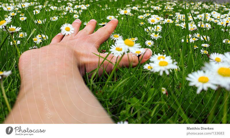 Flügel Sommer Frühling Mai April Schönes Wetter schön Wiese Gras grün Gänseblümchen Blume Blumenwiese Hand Finger Weitwinkel Erholung Feierabend Wochenende