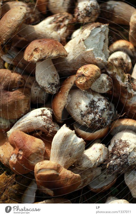 """Shrums 4 Lebensmittel Ernährung Essen Vegetarische Ernährung Diät Fasten Slowfood """"Wildes Essen"""". Speisepilze Nahrungssuche Umwelt Natur Sommer Herbst Pflanze"""