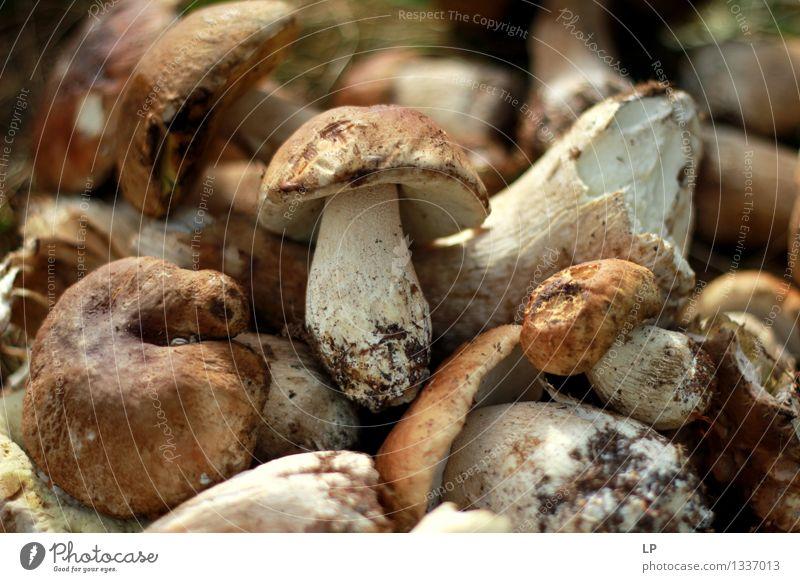 Natur Umwelt Leben Gesundheit Garten Lifestyle Lebensmittel wild Freizeit & Hobby frisch wandern Wellness Gemüse Ernte Pilz