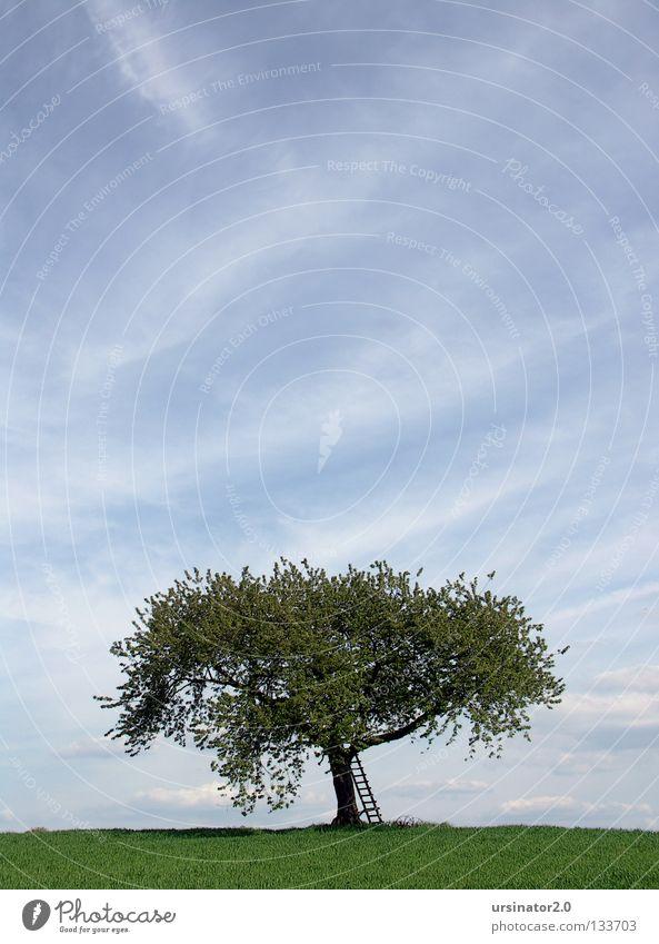 Der Baum 6 alt Himmel weiß grün blau Wolken Ferne Leben Wiese oben Blüte Frühling Landschaft Feld Deutschland