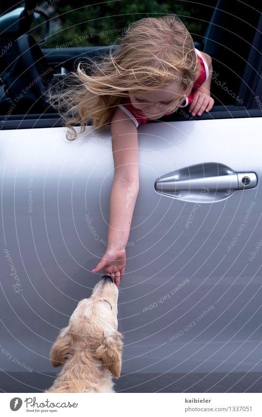 Kontaktaufnahme Mensch feminin Kind Mädchen 1 3-8 Jahre Kindheit PKW blond Tier Haustier Hund berühren füttern positiv Freude Akzeptanz Vertrauen Sympathie