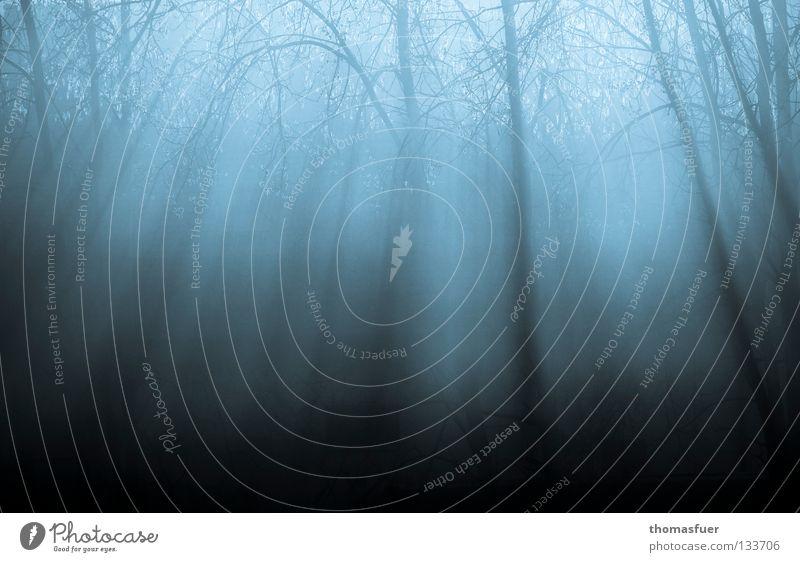 Zauberwald Baum blau ruhig Wald Lampe träumen Traurigkeit Denken Feld Nebel Beginn Hoffnung Trauer Ende Vergänglichkeit Verzweiflung
