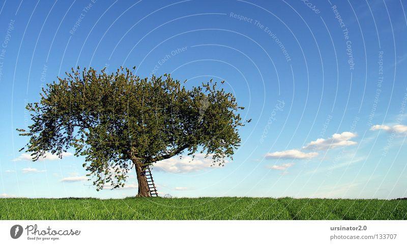 (mal wieder) der Baum 7 Wiese Feld Getreide Feldfrüchte Leiter Hochsitz Pflug alt altmodisch Blüte Frühling Leben Horizont Himmel Wolken Ferne Landschaftsformen
