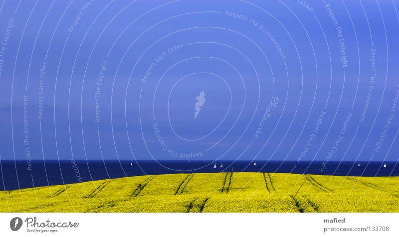 Nr. 50 Eastcoast Rapsody Rapsfeld Meer Wasserfahrzeug Segeln Segelboot Regatta Feld Traktorspur Hügel geschwungen Horizont Wolken hell-blau Schleswig-Holstein