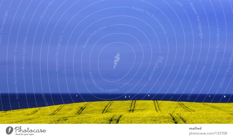 Nr. 50 Eastcoast Rapsody Wasser Himmel Meer blau Wolken gelb Frühling Wasserfahrzeug Feld Horizont Hügel Segeln Ostsee sanft