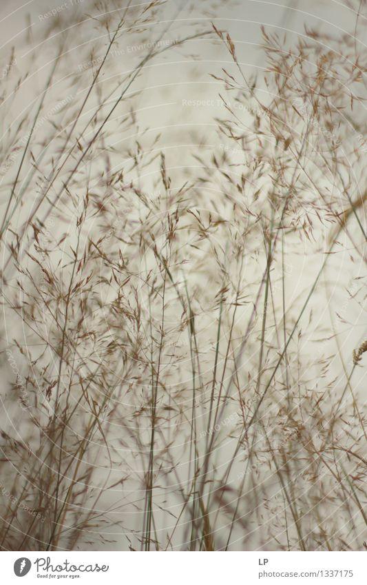 Licht Umwelt Natur Landschaft Pflanze Urelemente Luft Himmel Frühling Sommer Herbst Winter Klima Schönes Wetter Gras Nutzpflanze Wildpflanze Garten Park Wiese