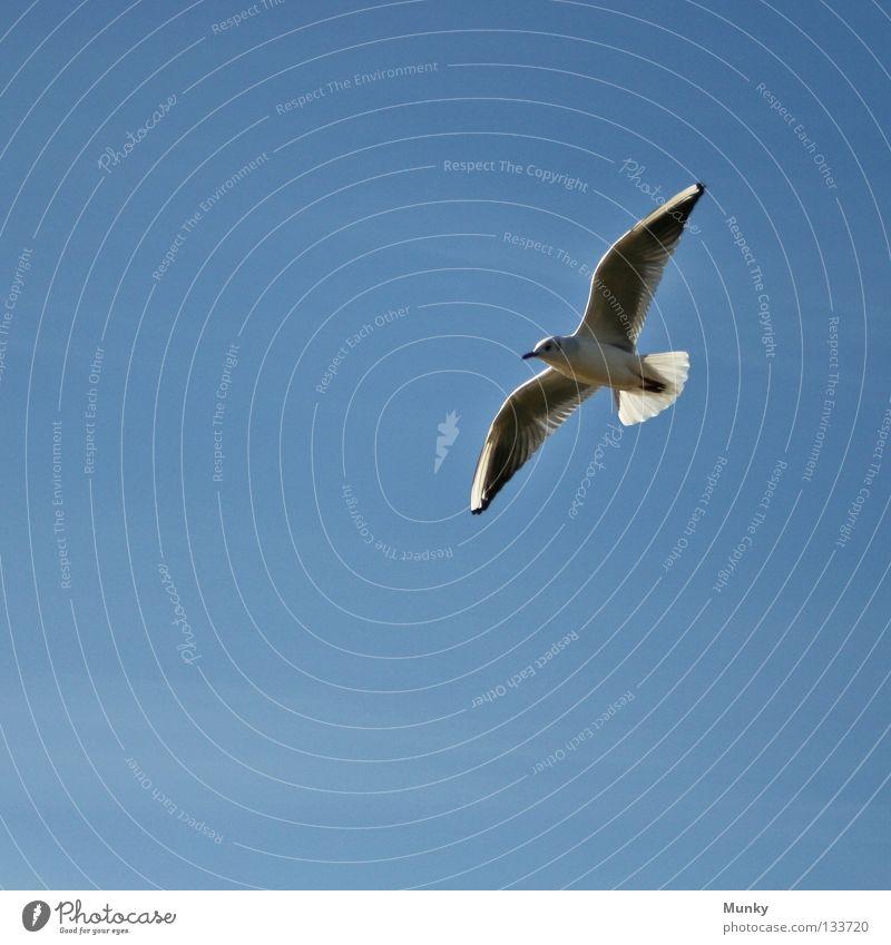 Beim nächsten Mal treff' ich! Himmel blau schwarz Vogel Kunst fliegen frei Sicherheit Luftverkehr Klarheit Quadrat silber Möwe Schweben gleiten überblicken