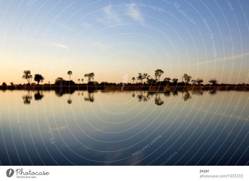 Symmetrie Natur Landschaft Wasser Himmel Wolken Horizont Sonnenaufgang Sonnenuntergang Baum Sträucher Flussufer Okavango Delta Palme Spiegelbild Außenaufnahme