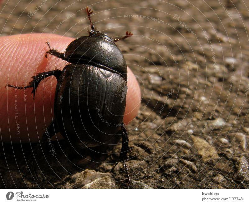 Krabbeltierchen Mann Hand schwarz Straße Wege & Pfade Beine Finger Flügel Verkehrswege Käfer Fühler krabbeln Teer