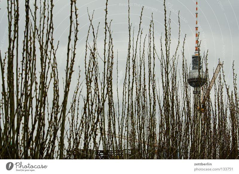 Verstecktes Gebäude Berlin Garten Park Wachstum Sträucher Burg oder Schloss Denkmal Wahrzeichen Berliner Fernsehturm Demontage Alexanderplatz Hecke Reifezeit