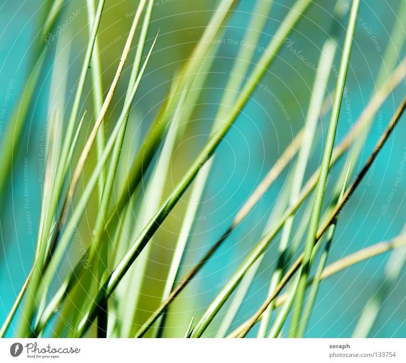 Binsen Natur Pflanze Umwelt Gras Küste Blüte Hintergrundbild Blühend Seeufer Flussufer Schilfrohr Umweltschutz Halm Röhricht Binsen Biotop