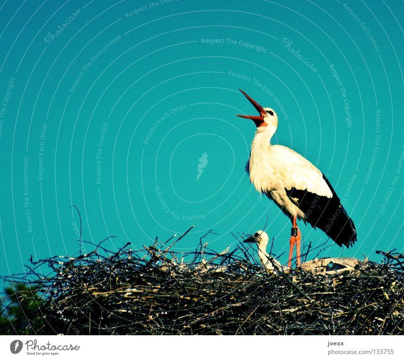 Heiiiiiinz, beeil dich! Der Kleine hat Hunger! Himmel Liebe sprechen Vogel Feder Ast schreien schwanger Schnabel Nest Nachkommen Storch Klappe Familie & Verwandtschaft Glücksbringer