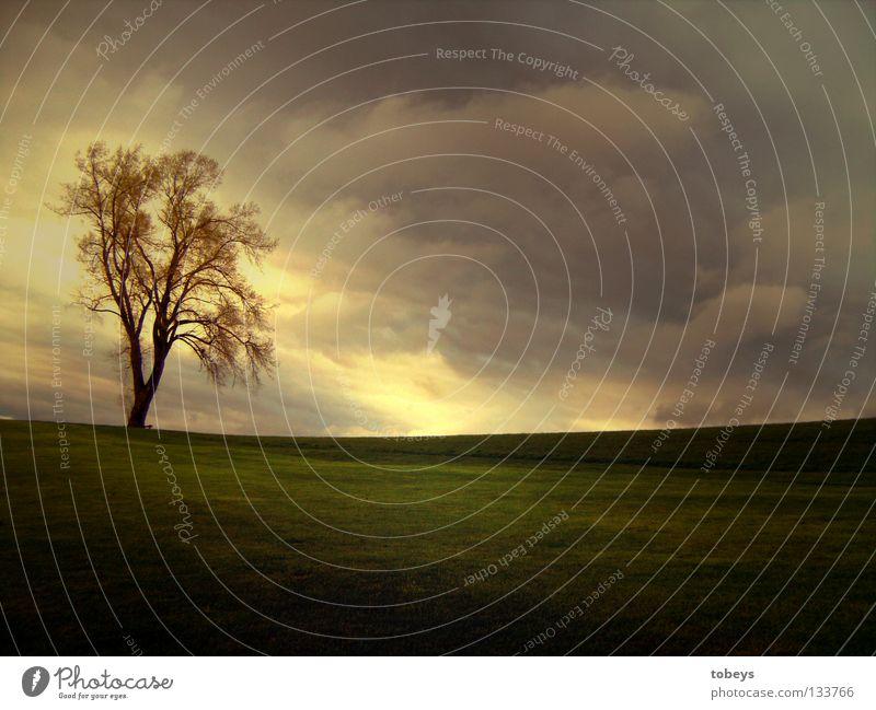 Topmodel Himmel Baum Einsamkeit Wolken Berge u. Gebirge Wiese Frühling Regen Wind Hügel Gewitter