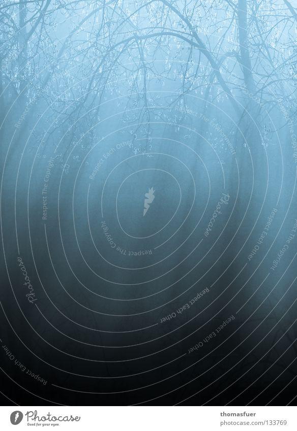 Zauberwald 2 Baum Feld Wald Nebel Reflexion & Spiegelung Märchen Blues ruhig Schleier Gedicht Hoffnung Trauer Denken träumen Fee Angst Panik Vergänglichkeit