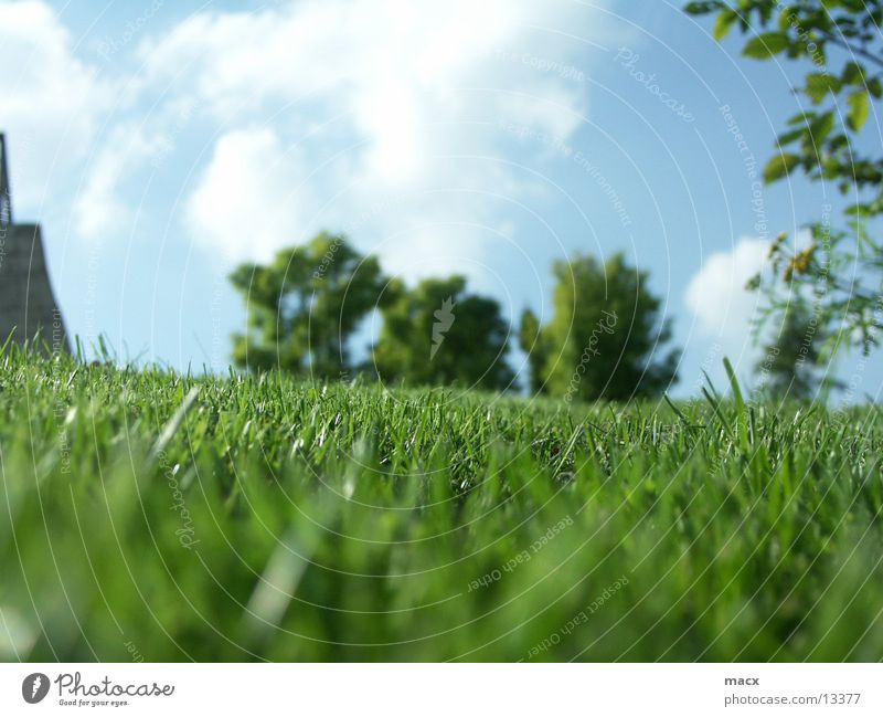MondeVerde Gras Baum grün ruhig Gelassenheit Natur Himmel