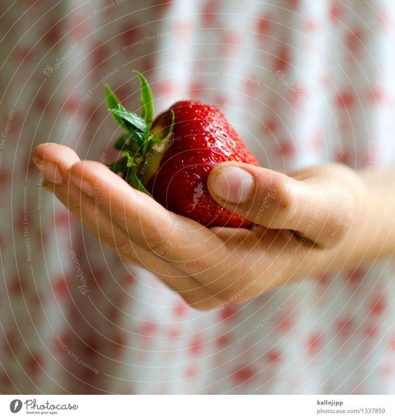 letzter sommertag Mensch Kind Natur Hand Mädchen Essen Frucht Kindheit Erfolg Ernährung Arme groß Finger süß festhalten lecker