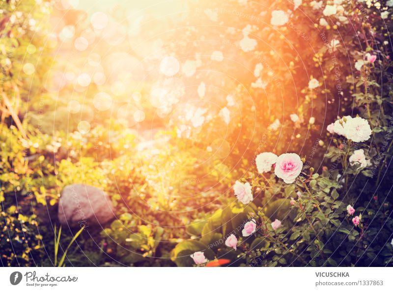 Wunderschöner sonniger Herbst Zeit im Garten oder Park Natur Pflanze Sommer Sonne Baum Blume gelb Gras Stil Hintergrundbild Design Sträucher Schönes Wetter