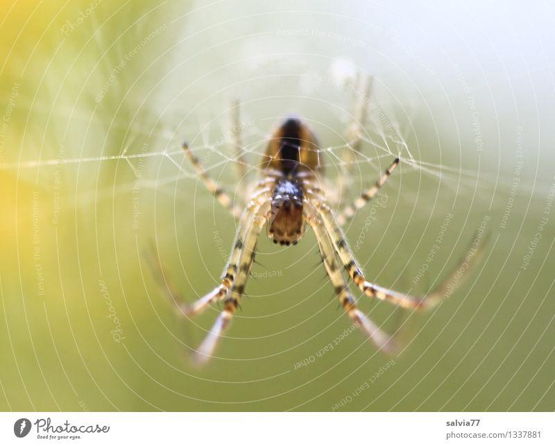 Was guckst du? Natur Tier gelb außergewöhnlich braun Angst Wildtier warten beobachten bedrohlich berühren Netzwerk nah Netz gruselig Jagd