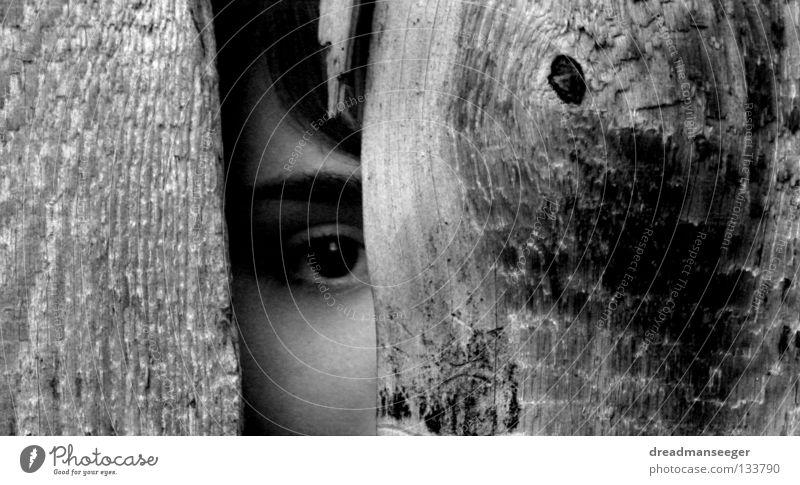 suche weiß schwarz Auge Holz Suche nah Holzbrett Spalte Maserung spionieren