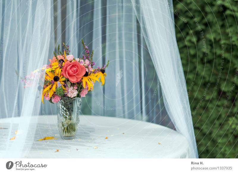 KuchenBuffet Freude Garten Feste & Feiern authentisch Lebensfreude Blumenstrauß Gardine Tischwäsche Vase Gartentisch Insektenschutz