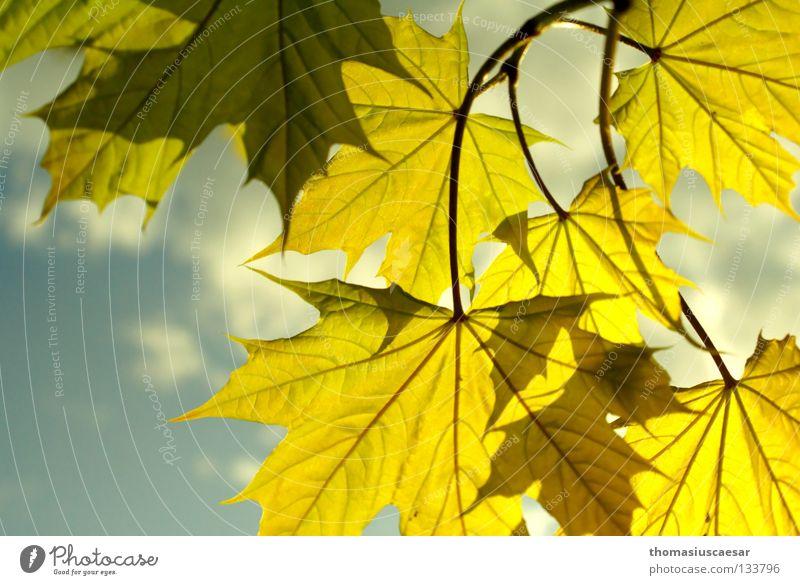 Frühlingstreiben Natur Himmel Baum Sonne grün blau Sommer Blatt gelb Herbst Gefühle springen hell frisch Ast