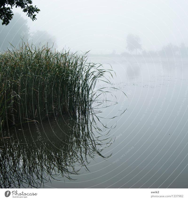 Nebliger Morgennebel Himmel Natur Pflanze Wasser Landschaft ruhig Ferne Umwelt Herbst natürlich Stimmung glänzend Luft Nebel Idylle nass