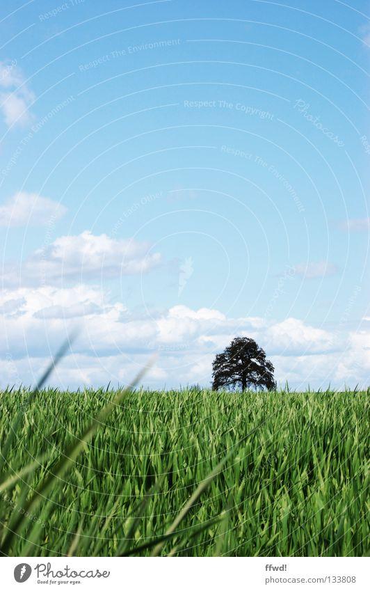 summer breeze Natur Himmel Baum grün blau Sommer ruhig Wolken Wiese Gras Frühling Landschaft Feld frisch Landwirtschaft leicht