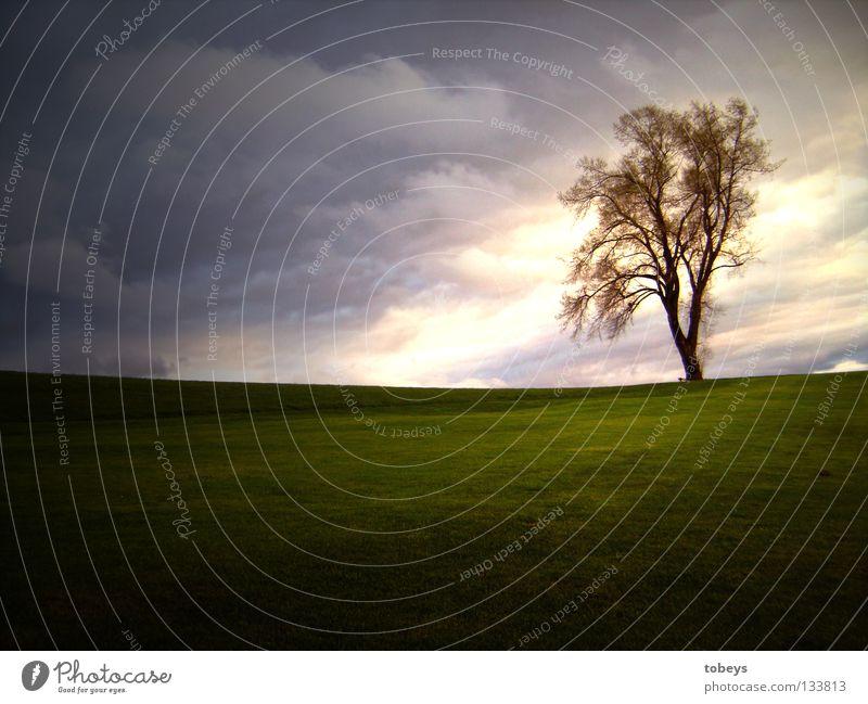 Model richtigrum Baum Wiese Wolken Hügel Dämmerung Regen Einsamkeit Himmel Jahreszeiten Berge u. Gebirge Abend Wind Gewitter