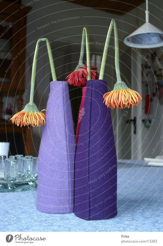 beck-motiv-21 Blume Vase Astern Häusliches Leben welk