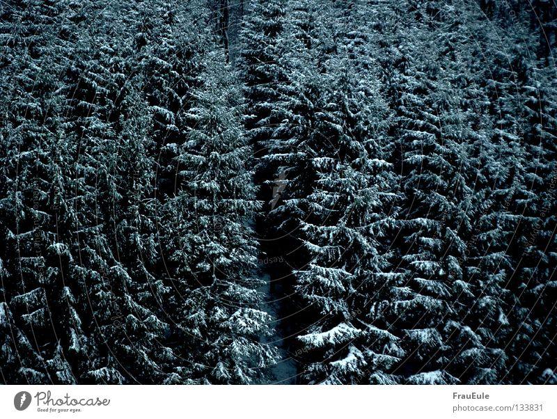 Morgen schneit's ganz sicher Farbfoto Außenaufnahme Menschenleer Tag Kontrast harmonisch Winter Schnee Natur Landschaft Wolken Wetter Unwetter Eis Frost Baum