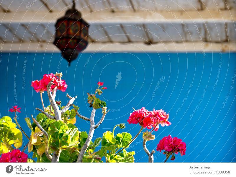 die Farben Marokkos Kunst Umwelt Natur Pflanze Sommer Blume Blatt Blüte Essaouira Stadt Hütte Bauwerk Mauer Wand Fassade Balkon Terrasse Blühend hängen Wachstum