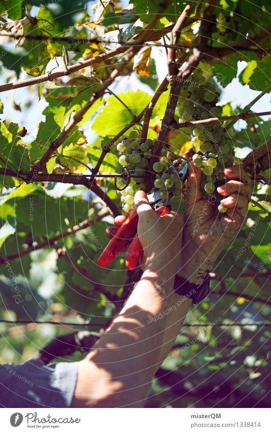 Weinlese I Kunst ästhetisch Wein Wein Ernte Kunstwerk Weinlese Weinberg Weinbau Weintrauben Weinblatt Weingut Wirtschaft Erntehelfer