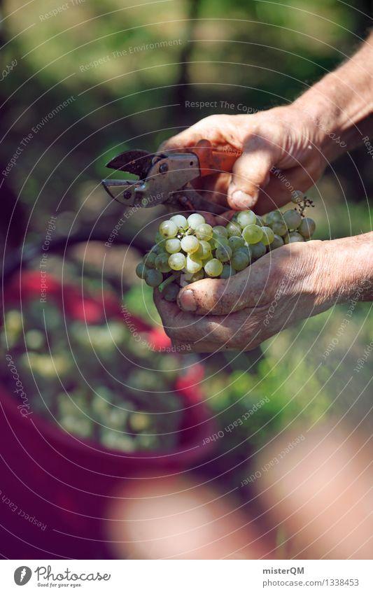 Weinlese III Kunst ästhetisch Wein Wein Ernte Kunstwerk Weinlese Weinberg Weinbau Weintrauben Weinblatt Weingut Alkohol Erntehelfer