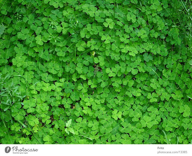 beck-motiv-23 Klee grün Wiese