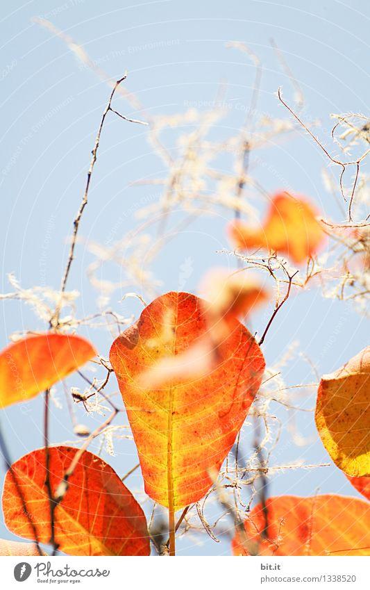 Herbstflusen Himmel Natur Ferien & Urlaub & Reisen Pflanze blau Baum Blatt Wald Wärme Garten Zeit Stimmung orange Dekoration & Verzierung Vergänglichkeit