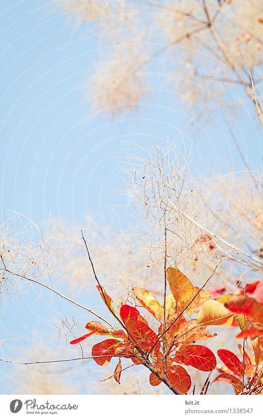 ein Bündel Herbst Garten Gartenarbeit Kunstwerk Natur Himmel Schönes Wetter Pflanze Baum Sträucher Wärme blau orange Stimmung Glück Vergänglichkeit