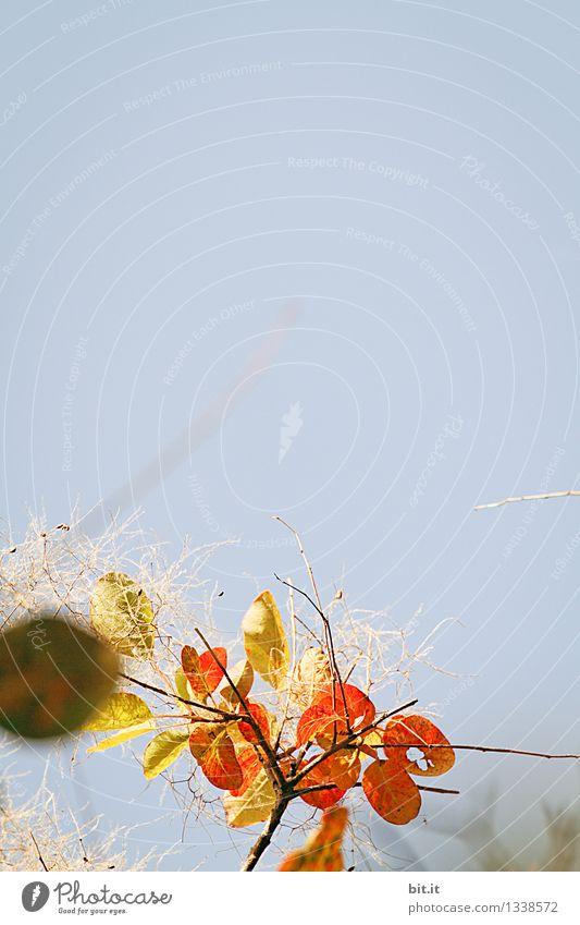 Fleck im Auge... Natur Herbst Stimmung Wandel & Veränderung herbstlich Herbstlaub Herbstfärbung Herbstbeginn Farbfoto
