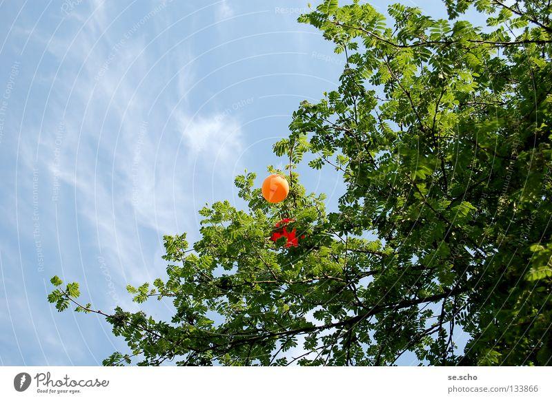 Frühes Ende Frühling Luftballon Helium rot Baum Baumkrone Blätterdach Desaster hängenbleiben Freude Luftverkehr Himmel Himmelsblau orange