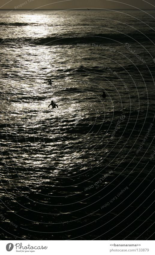 Wavewatchers Wasser Sonne Meer Strand Erholung Wellen warten Surfen Surfer Funsport Surfbrett Wildwasser San Diego County