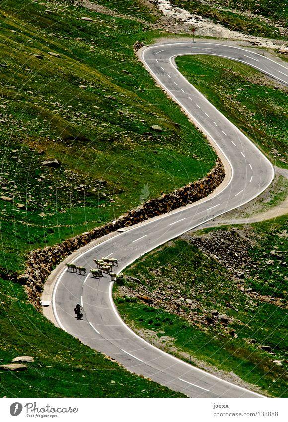 Warteschleife Straße Wiese Berge u. Gebirge gehen geschlossen warten fahren stoppen Schaf Verkehrswege eng aufwärts Barriere Kurve Langeweile Motorrad
