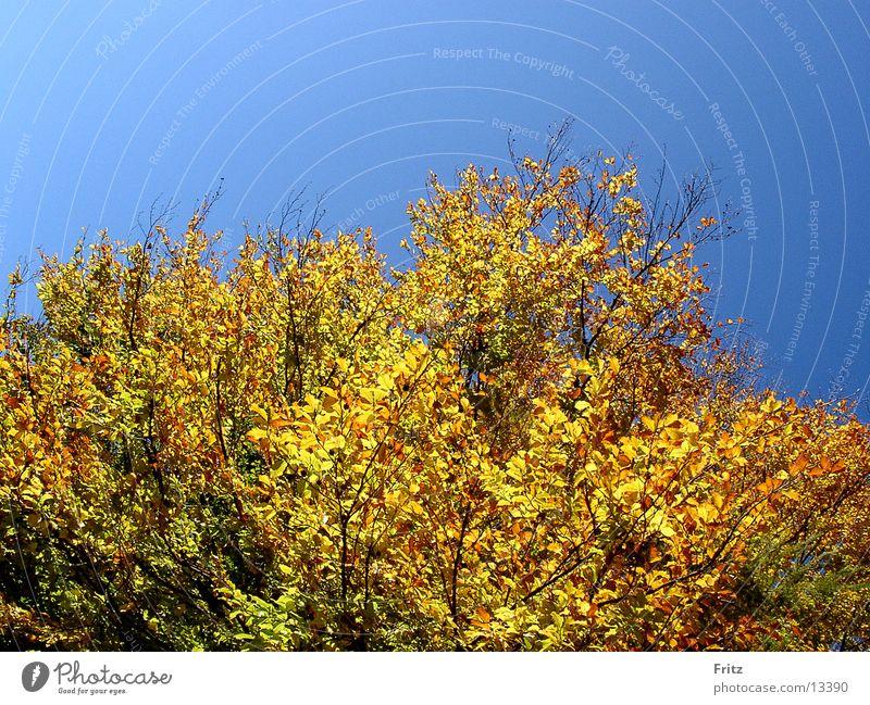 beck-motiv-12 Baum Blatt Herbst Stimmung