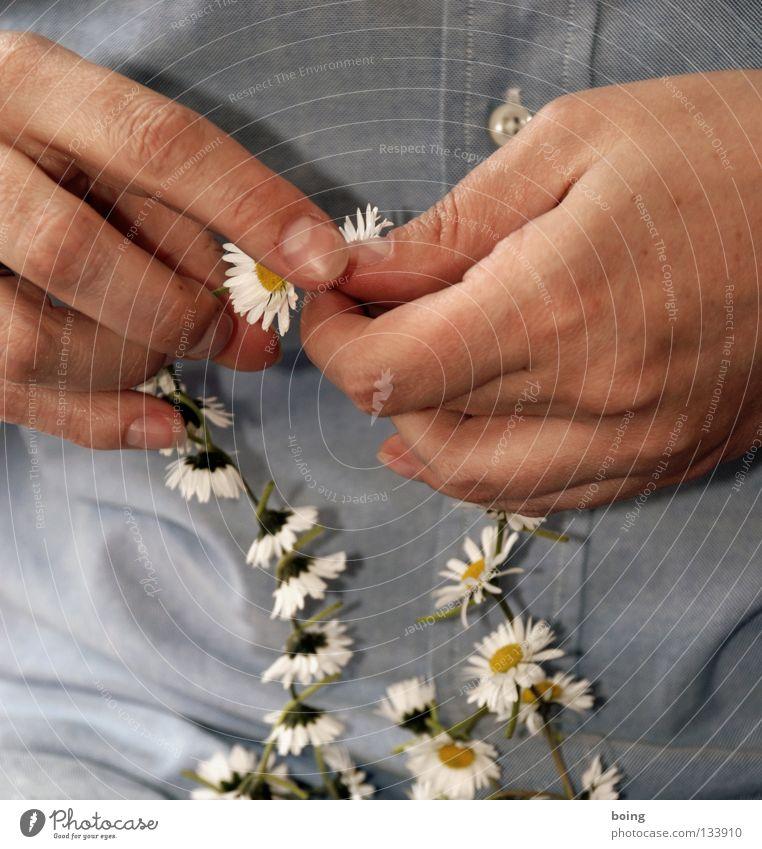 Welcome to Cape Kumukahi Kranz Blütenkette Blumenkranz Schmuck Gänseblümchen Blumenhändler binden Verbundenheit Hawaii Blumenstrauß Vergänglichkeit filigran