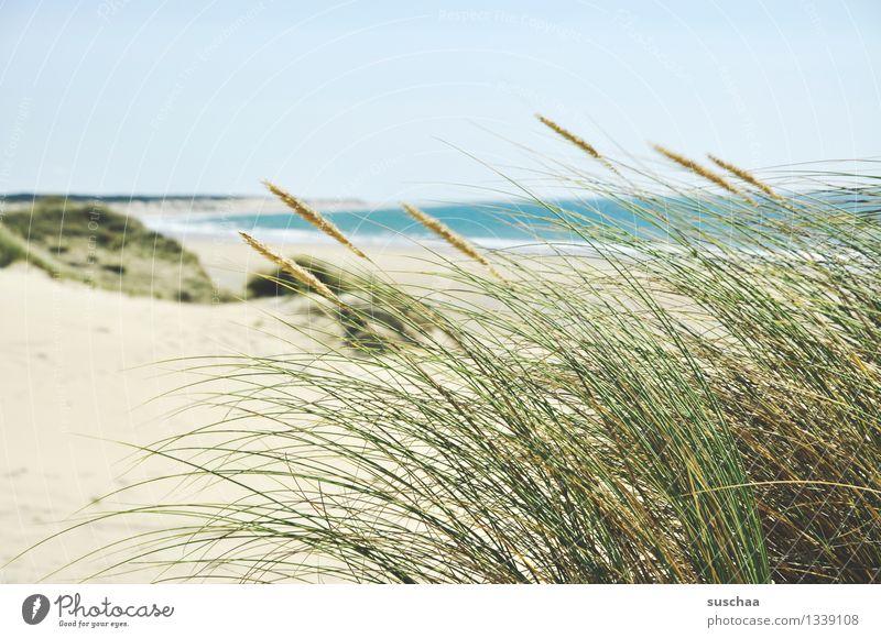 in den dünen .. Himmel Ferien & Urlaub & Reisen Sommer Wasser Sonne Erholung Meer Strand Gras Küste Sand Düne