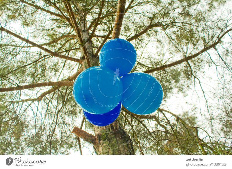Luftballons blau Feste & Feiern Party Dekoration & Verzierung Schmuck Baumschmuck Innenarchitektur Geburtstag Kindergeburtstag Garten Park Kiefer Baumstamm Ast