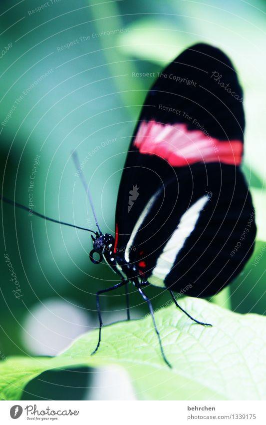 schmetterling Natur Pflanze Tier Baum Sträucher Blatt Garten Park Wiese Wildtier Schmetterling Tiergesicht Flügel Fühler Beine Rüssel Facettenauge 1 beobachten