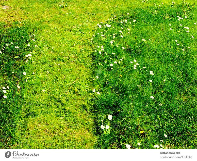 Eins Gras Wiese Rasen Gänseblümchen Gärtner fleißig Gartenarbeit Freizeit & Hobby Wochenende Sommer Frühling rasenmähen abgemäht Rasenpflege Juttaschnecke