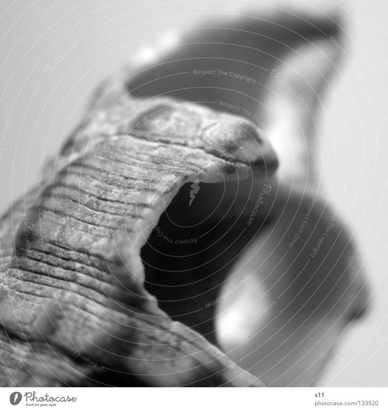 Secret IV geheimnisvoll Muschel Meer Strand Sandstrand Haus Schneckenhaus Wohnung Suche finden Spirale Schwung geschwungen Eingang schwarz weiß schön perfekt