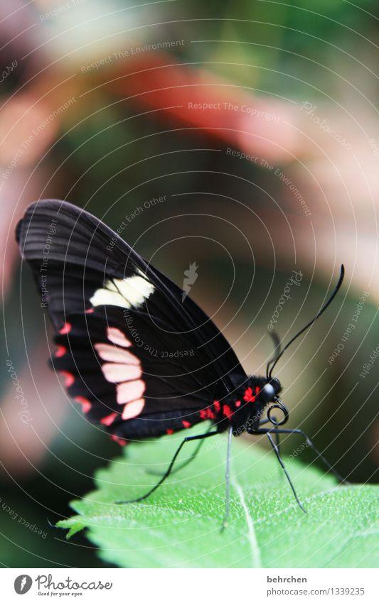 schau mich an! Natur Pflanze Tier Frühling Sommer Schönes Wetter Baum Blatt Garten Park Wiese Wildtier Schmetterling Tiergesicht Flügel 1 beobachten Erholung